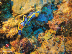 Custom Dive Logs Free Download: Nudibranch