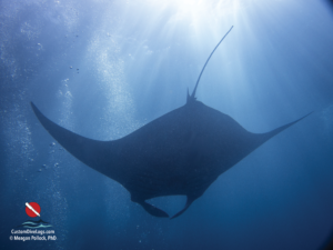 Custom Dive Logs Free Download: Manta Ray
